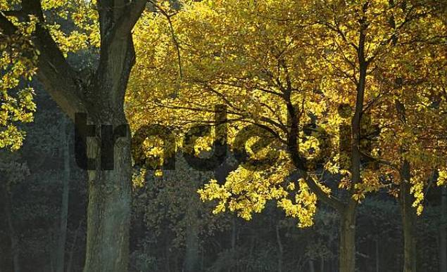 Autumn coloured trees in the sunlight Germany