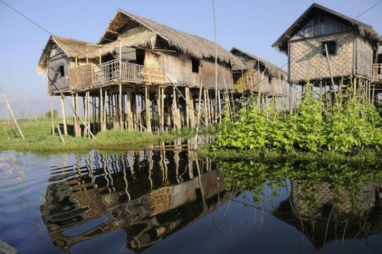 Stilt houses with a floating garden built by the Inthas in Maing Thauk on the Inle Lake, Shan State, Myanmar, Burma, Southeast Asia, Asia