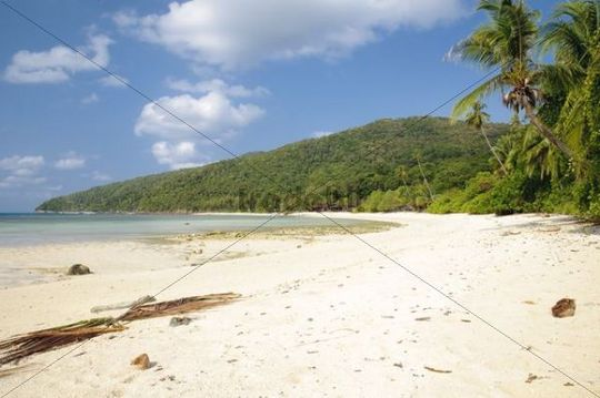 Beach with palm trees, Pulau Redang island, Malaysia, Southeast Asia, Asia