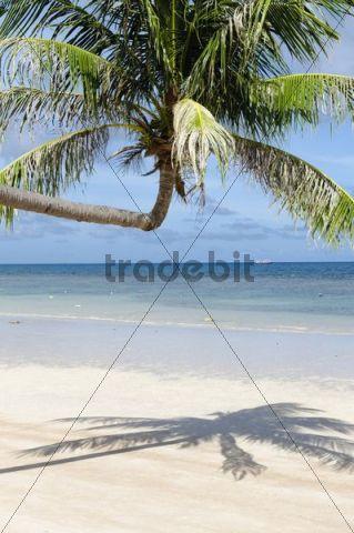 Palm tree, sandy beach, turquoise sea, island, Koh Tao Island, Thailand, Asia