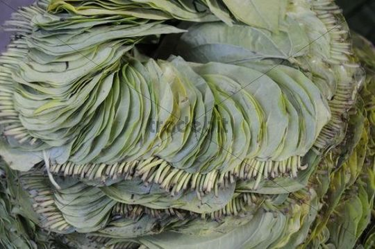 Background, Betel leaves (Piper betle) for chewing sold on the market, Pagan, Mandalay, Burma, Southeast Asia, Asia