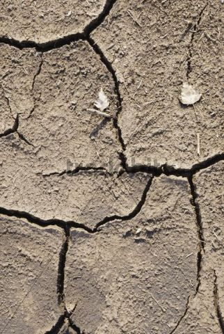 Cracks in peat soil, Nicklheim, Bavaria, Germany, Europe