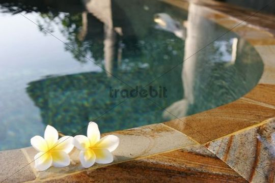 Swimming-pool, flowers