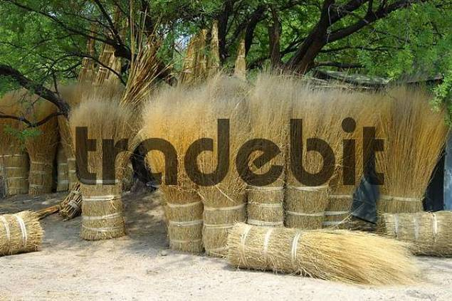 reed bundles for thatched roofs for sale on a market, Okavango Delta, Botswana