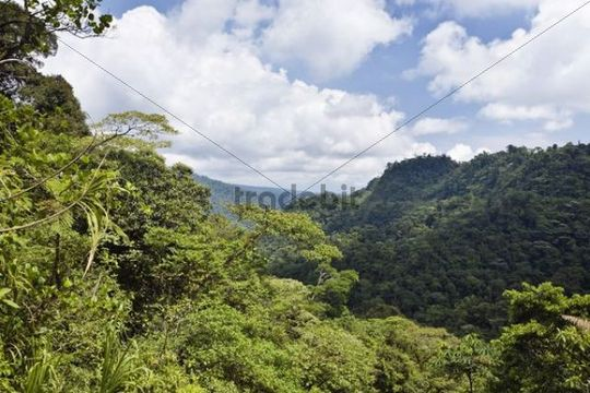 Mountain rainforest, Braulio Carrillo National Park, Costa Rica, Central America