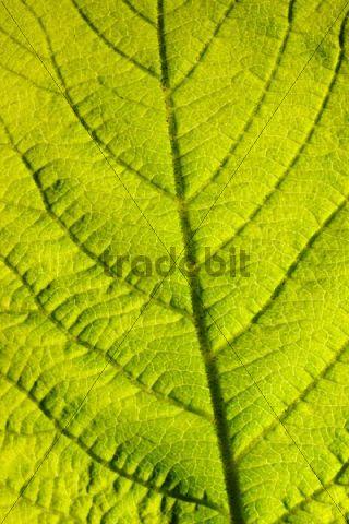 Leaf structure, close-up