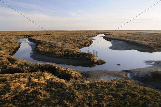 Salt marshes near St. Peter-Ording, Schleswig-Holstein, Germany, Europe