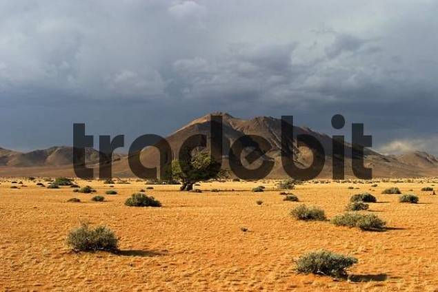 Dry landscape with a upcoming thunderstorm. Tiras Mountains, Farm Koiimasis, Namibia, Africa