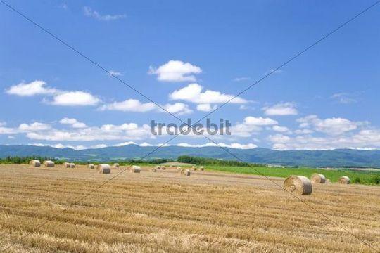 Hay harvest, Hokkaido, Japan, Asia