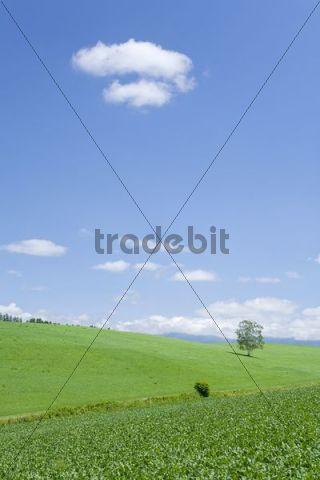 Grassland, Hokkaido, Japan, Asia