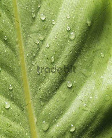Leaf, macro