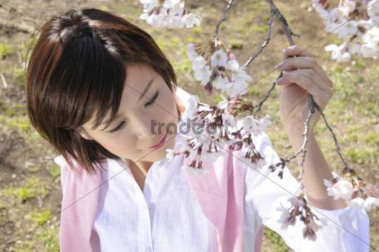Young woman enjoying the cherry blossom