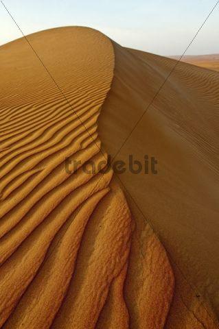 Dune ridge, Wahiba Sands, Oman, Middle East