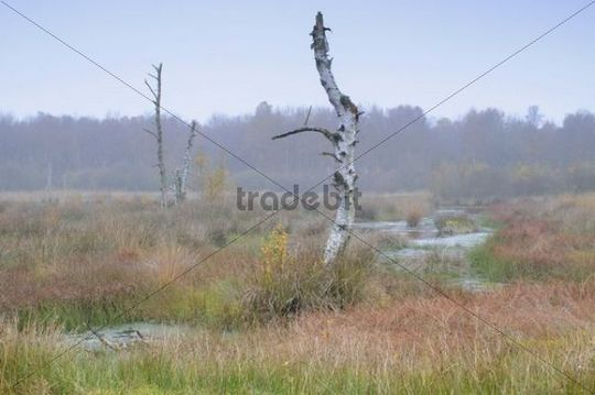 Autumn in the Dutch raised bog reserve Bargerveen, Netherlands, Europe