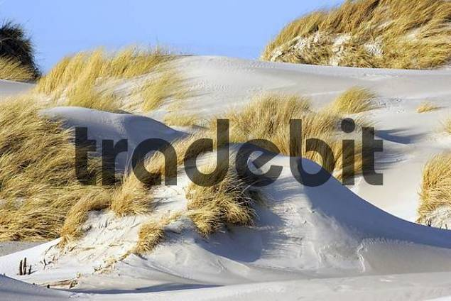 sand dunes at the german island Helgoland in winter - Helgoland, Schleswig-Holstein, Germany, Europe
