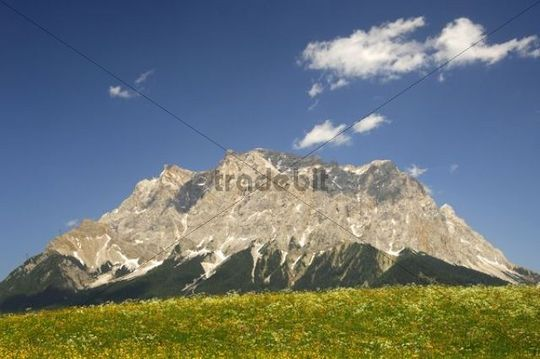 Flowering meadow at the foot of the Wetterstein Mountains with Zugspitze Mountain, Ehrwald, Tyrol, Austria, Europe