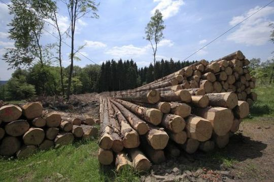 Timber harvesting, timber, spruces lying on the road, cleared area behind, Wipperfuerth, North Rhine-Westphalia, Germany, Europe