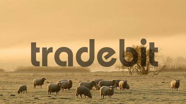 sheep on a foggy pasture