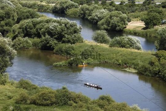Rowers, Old Main River near Volkach, Mainschleife, loop in the Main River, Mainfranken, Lower Franconia, Franconia, Bavaria, Germany, Europe