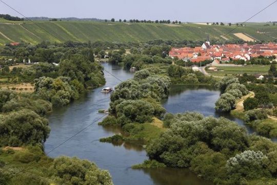 Old Main River, Nordheim am Main, Mainschleife, loop in the Main River, Mainfranken, Lower Franconia, Franconia, Bavaria, Germany, Europe