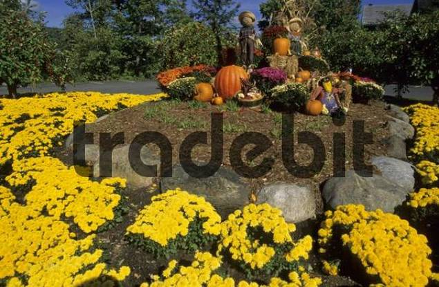typical american garden decoration in fall, Vermont, USA