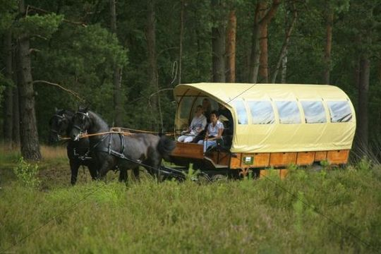 Horse carriage ride in the Lueneburg Heath, Lower Saxony, Germany, Europe
