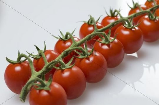 French vine tomatoes