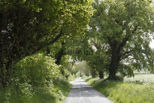 Avenue, Monasterboice, County Louth, Leinster, Ireland, Europe