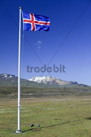 Icelandic national flag blowing in the wind on a meadow, Borsmoerk, Iceland, Europe