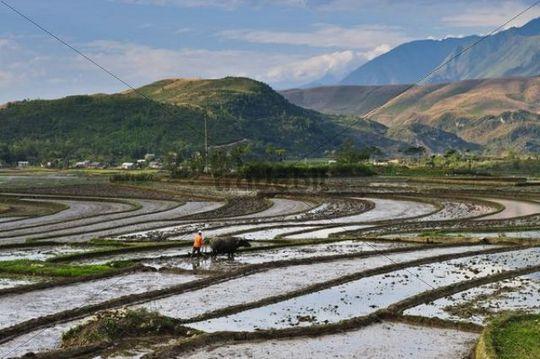 Rice terraces near Sapa, northern Vietnam, Vietnam, Asia