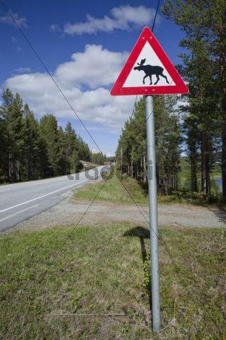 Moose warning sign, Norway, Scandinavia, Europe