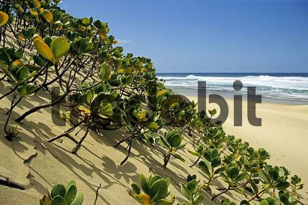 Coast and beach in the Greater-St. Lucia-Wetland National Park, South Africa, Africa