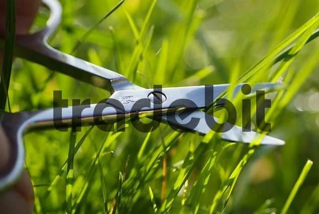 blades of grass cut with scissor