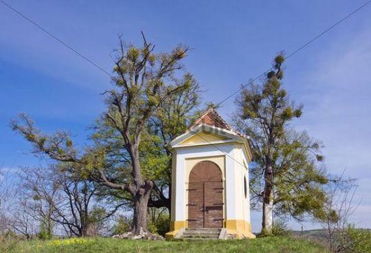 Chapel of St. Florian, cultural heritage, and Limes, Littleleaf Linden (Tilia cordata), memorial trees on Floriánek, Koryčany, Kroměří district, Zl&iacute