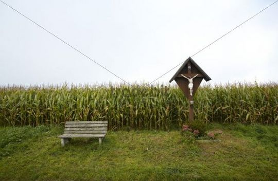 Landscape, corn field, wayside shrine, bench, autumn, Aichach district, Upper Bavaria, Germany, Europe
