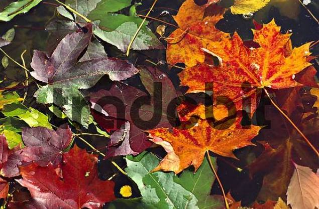 colourful leaves of trees in autumn