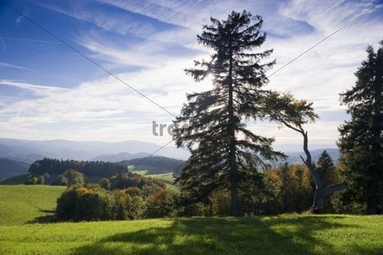 Panorama near St Maergen, southern Black Forest, Baden-Wuerttemberg, Germany, Europe