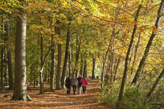 Walk in an autumnal forest, Lueneburg, Lower Saxony, Germany, Europe