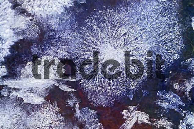 delicate hoar frost crystals on a leaf