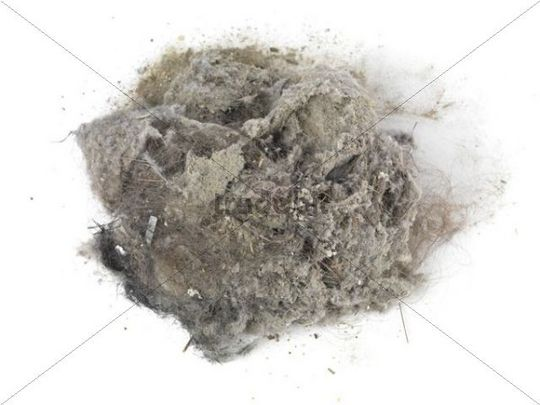 Pile Of Dust And Hairs Collected With A Vacuum Cleaner