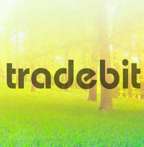 nature art, forest with beech-trees in the springtime