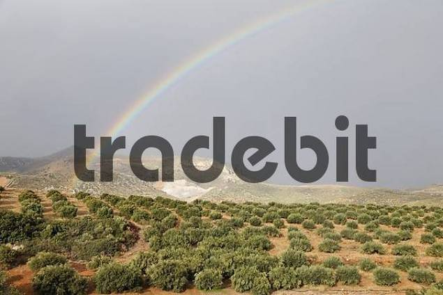 rainbow above olive grove, Eastern Crete, Greece