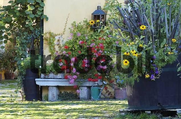 Flowers in a winery in Gumpoldskirchen Lower Austria
