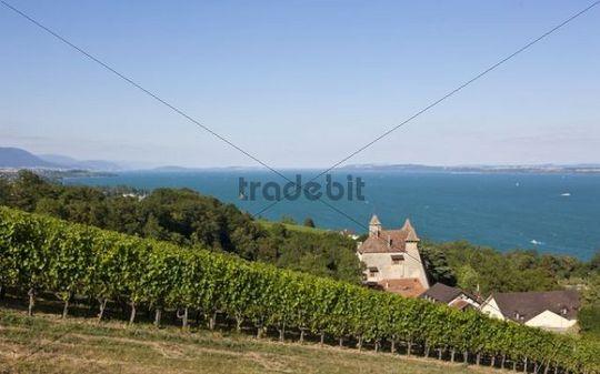 Château de Vaumarcus in vineyards, Vaumarcus, Lake Neuchâtel, Canton Neuchâtel, Switzerland, Europe