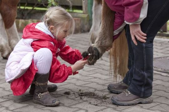Young girl cleaning the hooves of a pony