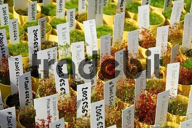 Seedlings in a hot bed