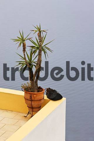 yucca in a pot and a black lava stone, Oia, Santorini, Greece