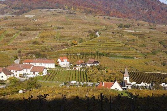Vineyards, town of Spitz, Wachau valley, Waldviertel region, Lower Austria, Europe