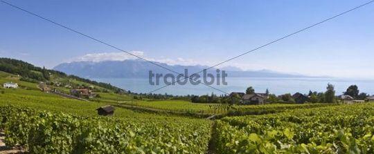 View of Lutry, Lavaux-Oron district, Lake Geneva, canton of Vaud, Switzerland, Europe