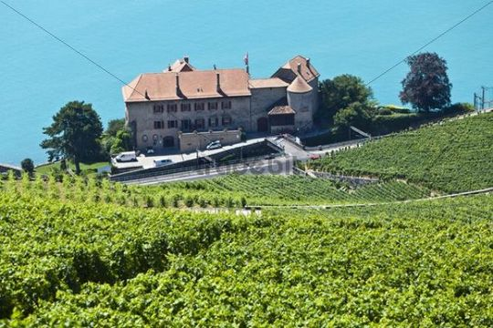 View across the vineyards near Vevey towards Chateau de Glérolles, Lake Geneva at back, Vevey, Canton Vaud, Lake Geneva, Switzerland, Europe